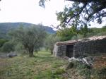 07-11-2009 Mons- bergerie, oliviers, la Provence.jpg